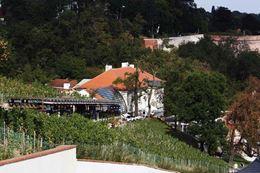 Obrázek z Obřad ve Svatováclavské vinici